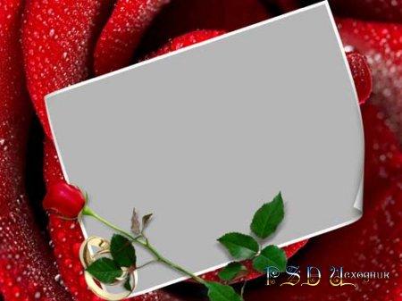Фоторамка – Красная роза