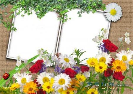 Фоторамка – Полевые цветы