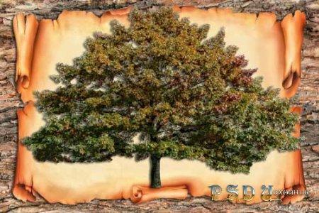 Генеалогическое дерево  PSD исходник