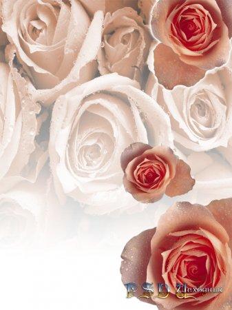 Розы PSD исходник