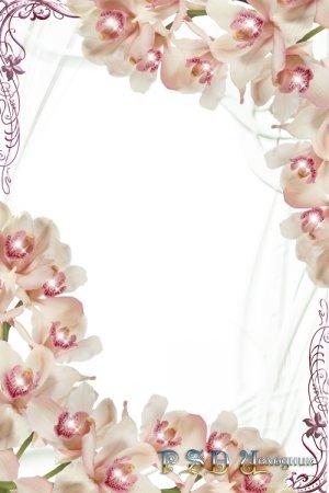 Фоторамка  Сияющие орхидеи