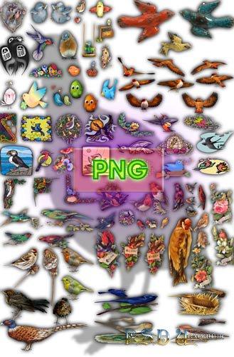 Png на прозрачном фоне - Разновидные птицы
