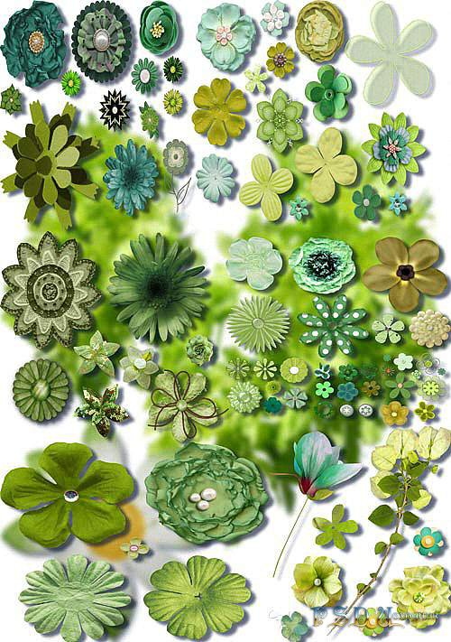Растровые клипарты - Зеленые цветы