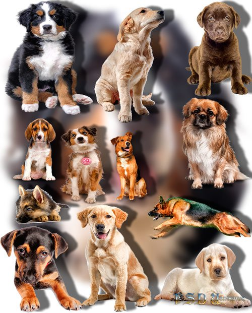 Растровые клипарты - Породистые собаки