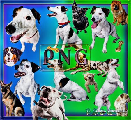 Растровые клипарты - Собаки разных пород